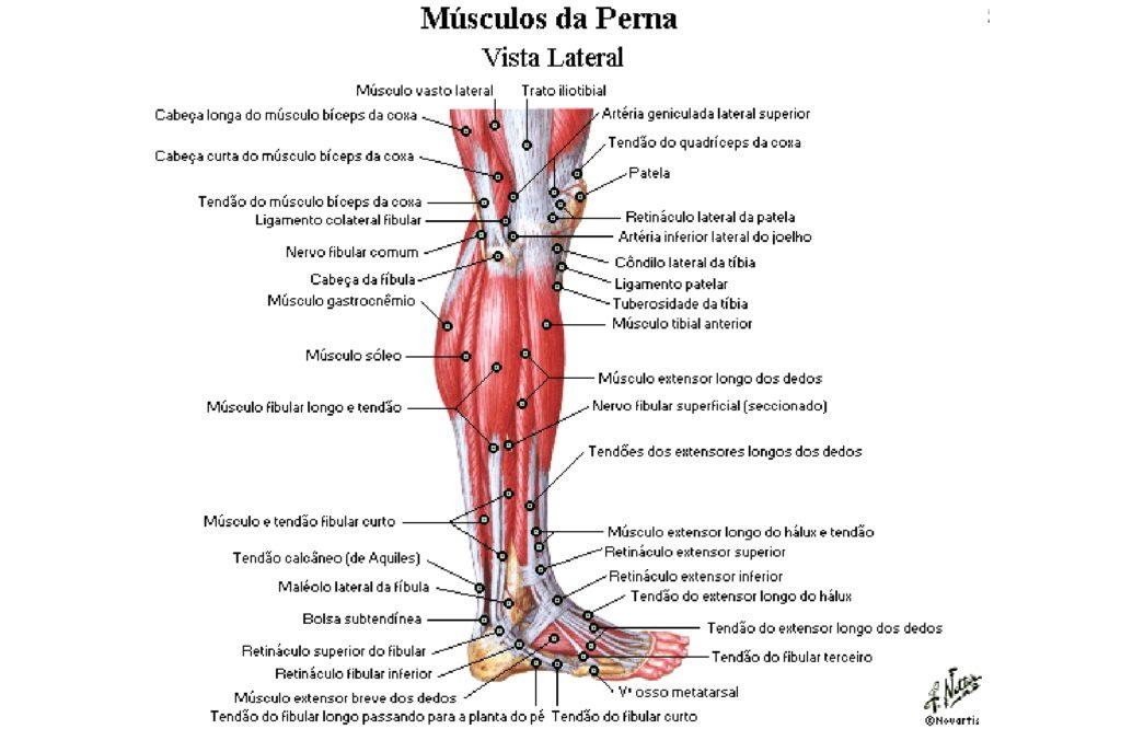 veia anterior da perna