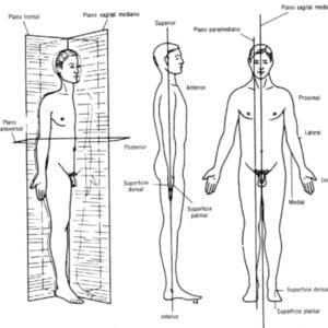 Termos de posição e direção do corpo humano